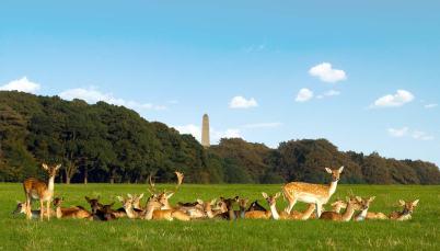 deer-monument.jpg