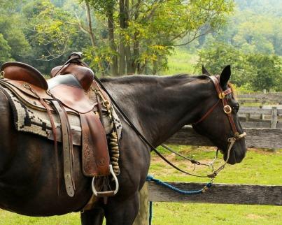 horse-176990_1280-1.jpg