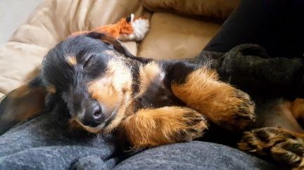puppy pippin.jpg